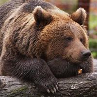 Шокирующие факты из жизни животных, или может ли медведь быть гомосексуалистом