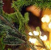 Рождественский пост: дорога к радости